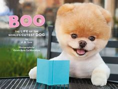 Miles and I are loving our copy of Boo's book. ps. click through to check out my interview with the worlds cutest dog. He has 1.7 million FB fans. what?!