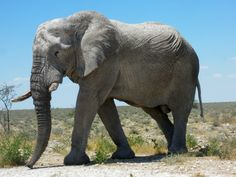 African Elephants. | pgcps mess - Reform Sasscer without delay.