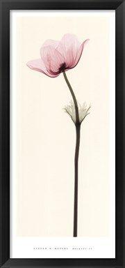 X-ray photography flowers - Anemone II Fine-Art Print by Steven N. Meyers at ArtPrintsforHomeDecor.com