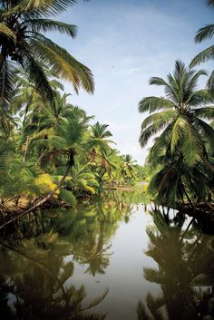 A serene Kerala backwater #nature #beautiful #water  Get great deals on hotels in Kerala, India. Book online, pay at the hotel. Read hotel reviews and choose the best hotel deal for your stay at www.hotel-booking-in.com.