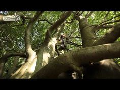 Wędrówka w Babiogórskim Parku Wycieczki Piesze - YouTube