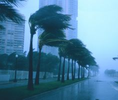 How to prepare for a natural disaster if you're a city clicker with pets!