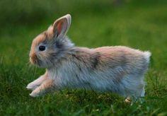 La alimentación del conejo, ¡todo lo que debes saber sobre ella!