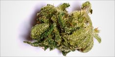 Blue Cheese: The Creamy Indica For Fun And Pain Management...