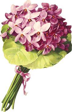 http://www.clipartplace.com/wp-content/uploads/2014/10/ClipArtPlace.com_Victorian_Floral_Purple_Nosegay_clipart.png