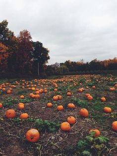 Can't wait to visit a pumpkin patch! I'm gonna have to say pumpkin patches are one of my most favorite things about fall lol Autumn Day, Autumn Leaves, Fall Winter, Autumn Rose, Hello Autumn, Fall Inspiration, Autumn Aesthetic, Seasons Of The Year, Samhain
