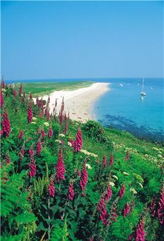 Shell Beach, Herm, Channel Islands. The best beach in the world!