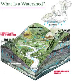 """What is a Watershed? A watershed is an area containing all the land that brings water to a lake. Streams, creeks and ditches all bring water to the lake, but so does excess rainwater flowing over the land (known as """"runoff"""") and water that percolates through the soil (""""groundwater""""). No matter where you are, you are in a watershed. A healthy lake starts upstream: Clean lake waters flow from healthy landscapes!"""