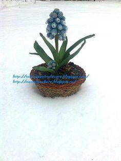 muscari Sugar Flowers, Plants, Flora, Plant, Planting