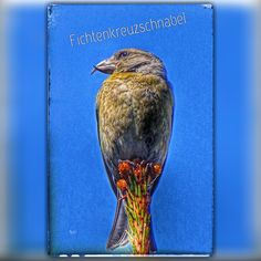 Bird, Animals, Nature, Animales, Animaux, Birds, Animal, Birdwatching, Animais