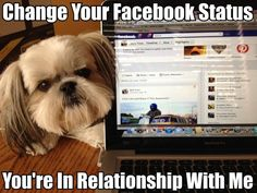 16 Funny Shih Tzu Memes Of All Time Yea pretty much Perro Shih Tzu, Shih Tzu Hund, Shih Tzu Puppy, Yorkie, Cute Puppies, Cute Dogs, Dogs And Puppies, Doggies, Shih Tzus