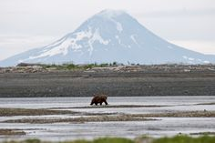 Katmai National Park Alaska-- Katmai National Park is home to Mt. Katmai, an active volcano which blew its top in 1912 in what was the largest volcanic eruption in Alaska's recorded history.  Mt. Katmai now features a beautiful crater lake where its peak once stood.  The park is also famous for its abundant brown bear population, with an estimated 2000 making their home within Katmai's boundaries.