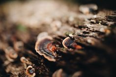 Photo by Tessa Cheetham #leaves #plants #forest #nature #outdoors #green #bushes #trees #mountglorious #australia #photography #naturephotography #free-lens #free-lensphotography #freelensphotography #mushrooms #log #fungus