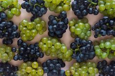 Green and purple grapes -- Photo excerpted from Wine Simplified: Navigate Wine with Confidence, an interactive e-book from Open Air Publishing.