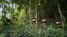 Projeto integra abelhas nativas sem ferrão e conservação da natureza