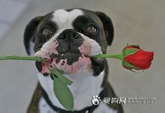 """Here you go, Sweetheart.  I picked it just for you.""  (boxer)"