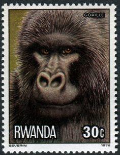 Rwanda, 1978 http://i1181.photobucket.com/albums/x424/nethryk/Volume%207/Rwanda-858Gorilla-3-20-78Photo-Severin.jpg