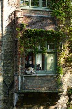 LIFE GOALS: WINDOWS  Windows.  Fresh air. Ivy. Reading room with a view. And a pup.