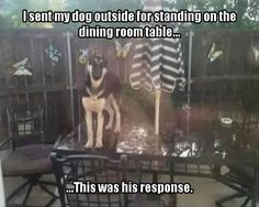 I sent my dog outside for standing on the dining room table. This was his…