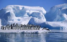 World's largest protected marine area to shelter millions of penguins by Supertrooper http://focusingonwildlife.com/news/worlds-largest-protected-marine-area-to-shelter-millions-of-penguins/