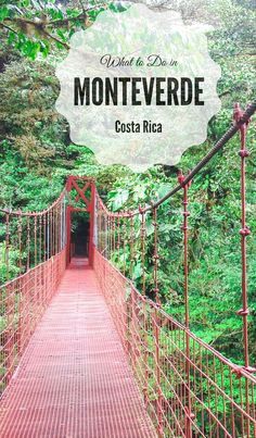 Three days guide to Monteverde Cloud Forest Reserve - the lush escape of Costa Rica: what to do in Monteverde Costra Rica in four days. Where to see the wild animals, including white-faced monkeys, go ziplining, join the coffee tour and what to eat. #CostaRica #Monteverde #SantaElena