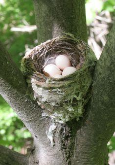 Bird nest in spring