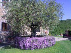 Abbellire un albero di ulivo! Ecco 16 splendidi esempi per ispirarvi…