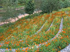 London 2012 Olympic Park | London UK | LDA Design with Hargreaves Associates, steps, gabions, wildflowers, slope