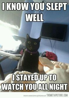 I know you slept well. I stayed up to watch you all night. Lolcat!
