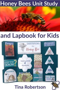 Whether you want to learn about how honey bees are fascinating master pollinators, learn about the interesting social activities in the hive, learn about beeswax, or know what is honey, these honey bee activities and resources will be helpful. You'll love these fun honey bees lapbook! CLICK HERE to grab it! #lapbook #honeybees #unitstudy #homeschoolscience #handsonlearning Bee Activities, Science Activities For Kids, Social Activities, Outdoor Activities, Bee Life Cycle, Earth Science Lessons, Homeschool Curriculum, Homeschooling, Nature Study