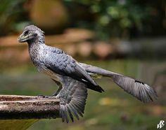 Prehistoric bird by Dwarf4r.deviantart.com on @DeviantArt