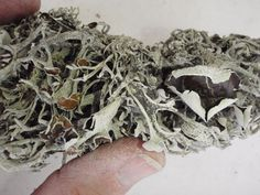 General info on dyeing with lichens