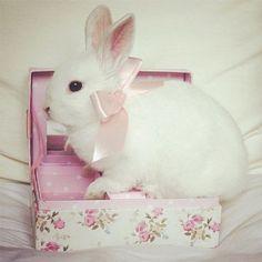 Content rabbit