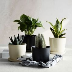 The Sill Planter + Plant - The August | west elm