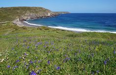 Cornwall CAM - Bluebells above Kennack Sands East beach