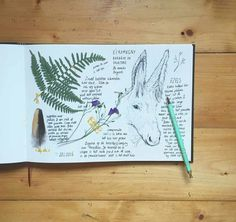 Holiday herbarium by illustrator & photographer Anja Mulder - deblauwebeer on Instagram