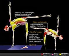 rasa yoga cafe...: Ardha Chandrasana (Half Moon Pose) Anatomy!
