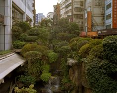 """sixpenceee: """"An urban jungle located in Taipei, Taiwan. Credit to photographer… sixpenceee: """"En urban jungel som ligger i Taipei, Taiwan. Takk til fotograf Andreas Mass. Games Design, Advantages Of Solar Energy, Go Green, Beautiful Places, Around The Worlds, Instagram, Taipei Taiwan, Greenery, Internet"""