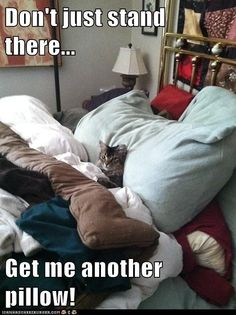 haha  this is Cupcake in Jan's bed!
