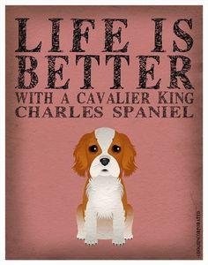 Cavalier King Charles Spaniel #truestory #cavalierkingcharles #pets