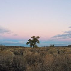 Lone tree #lonetree #winter #desert #sunset