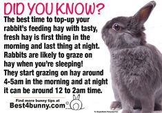 Bunny tip. - Bunny tip… Find more tips like this in our handbook available to buy here… www. Pet Bunny Rabbits, Pet Rabbit, Lionhead Rabbit, Bunny Care Tips, Diy Bunny Toys, Rabbit Facts, Bunny Supplies, Holland Lop Bunnies, Bunny Room