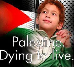 Palestine !