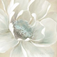 Shop for Portfolio Canvas Décor Winter Blooms II by Carol Robinson Wrapped Canvas Wall Art. Get free delivery On EVERYTHING* Overstock - Your Online Art Gallery Store! Get in rewards with Club O! Canvas Art Prints, Painting Prints, Canvas Wall Art, Painting Art, Peony Painting, Art Floral, Floral Wall, Art Web, Flower Art