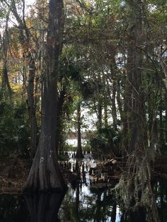 The Withlacoochee River Airboat Rides, Florida, River, Plants, Planters, Rivers, Plant, Planting, Planets
