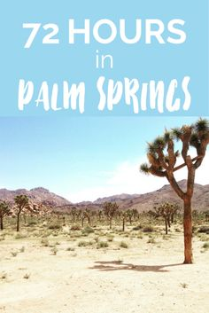 How to spend 72 hours in Palm Springs, California. This desert city has plenty to offer all year round from food, activities, parks, shopping and more!