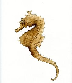 Seahorses make a great beginner art subject. Learn how to draw a seahorse with this step-by-step tutorial.