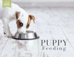 Dear Ask Darwin's, We are going to be bringing home our new puppy on August 14th (she will be 10 weeks old). She is currently on a dry kibble, and we'd like to transition her over to the Zoologics, and feed some tripe as well. What are your suggestions regarding amount to feed. - Amanda – Il.