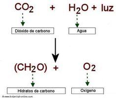 Cómo se produce y para qué sirve la fotosíntesis.