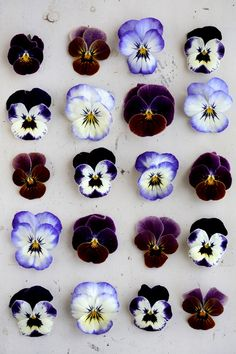 Shades of purple pansies.